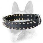 Spiked Leather Dog Collar for Schutzhund Training