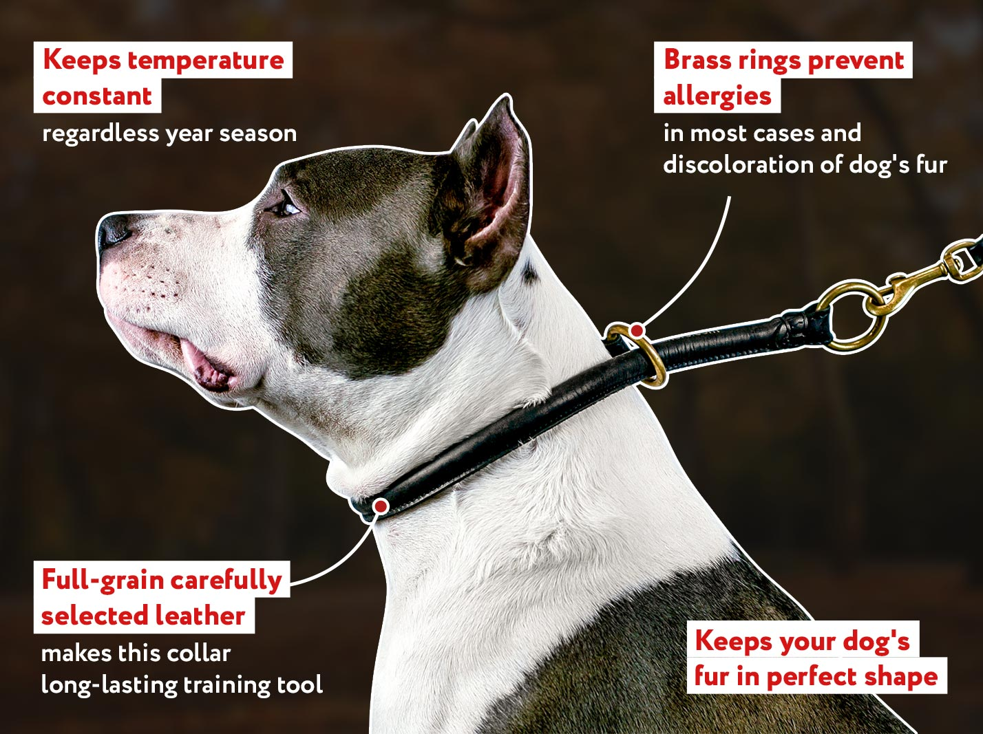 Round Leather Choke Collar for Dog Obedience Training