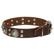 'Ace Style' Leather Dog Collar with Fancy Decor