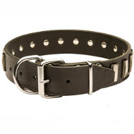 Stunning Leather Dog Collar Decorated with Classy Plates