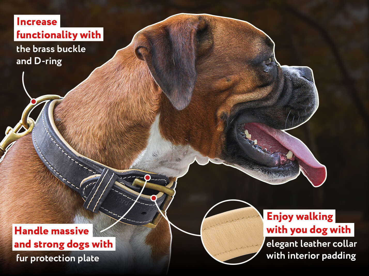 Royal Nappa Padded Hand Made Leather Dog Collar for All Breeds