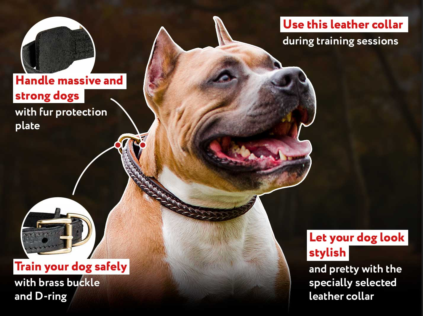 Most Beautiful Leather Collar for Working Dog Breeds