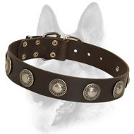 Luxury Leather Dog Collar with Designer Silver Conchos