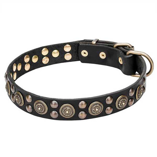 Genuine leather dog collar with rust-resistant studs