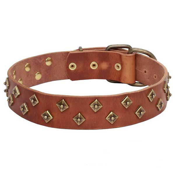 Strong leather dog collar with stunning adornments