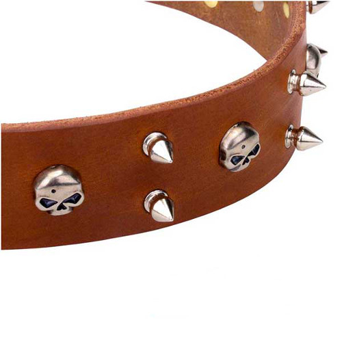 Reliable leather dog collar with skulls and spikes