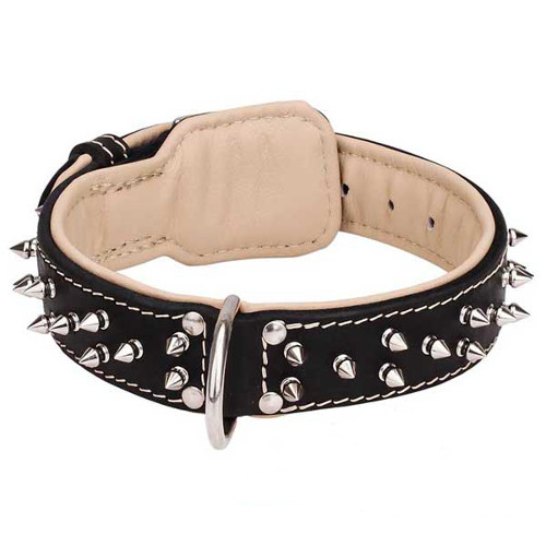 Outstanding leather dog collar