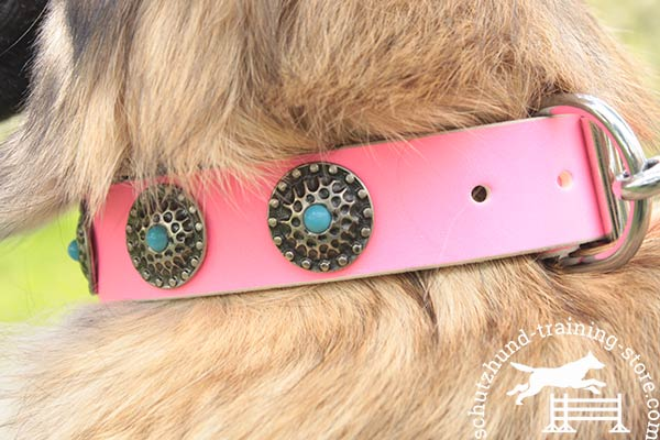 Pink Tervuren collar with conchos and blue stones