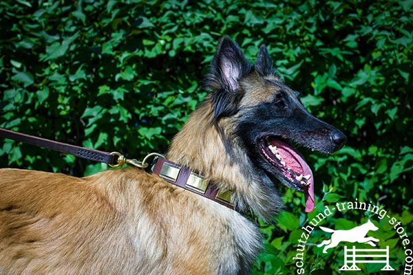 Designer leather Tervuren collar
