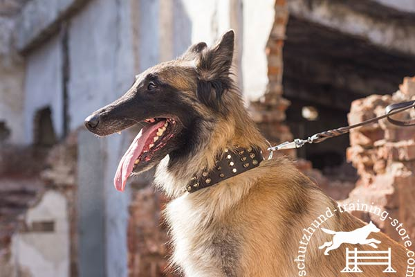 Super wide leather Tervuren collar