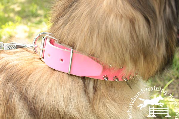 Pink leather Tervuren collar with nickel plated fittings