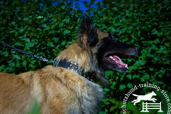 Genuine leather Tervuren collar for training