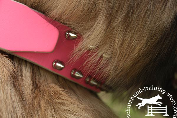 Pink leather Tervuren collar with two rows of spikes