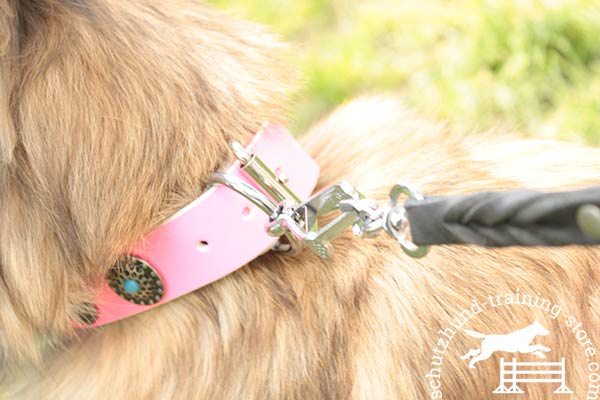 Pink Tervuren collar with durable D-ring