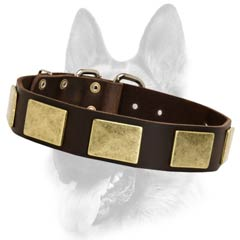 Everyday leather dog collar