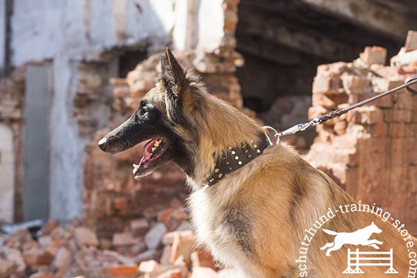 Leather Tervuren collar for walking in style
