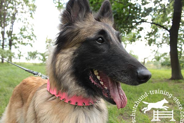 Tervuren pink leather collar of lightweight material with d-ring for leash attachment for any activity