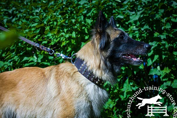 Tervuren brown leather collar of lightweight material with d-ring for leash attachment for improved control