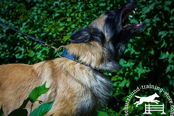 Tervuren black leather collar of classic design with d-ring for leash attachment for quality control