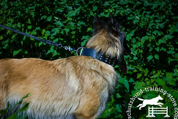 Tervuren black leather collar with rust-resistant fittings for any activity