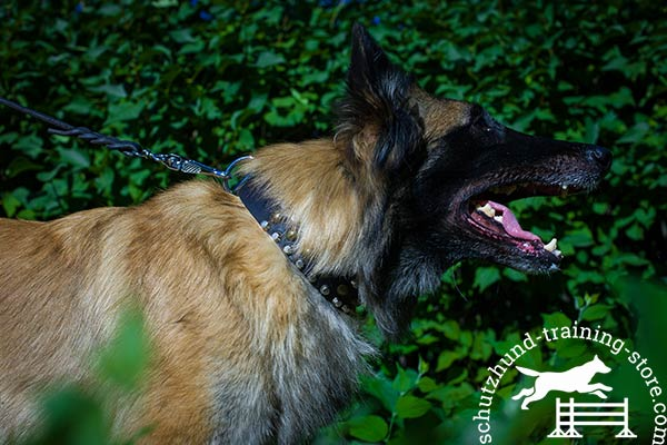 Tervuren black leather collar of genuine materials with d-ring for leash attachment for basic training