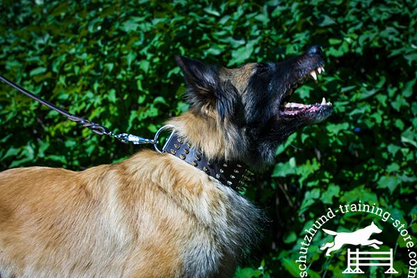 Tervuren brown leather collar of classic design with spikes for pulling activity