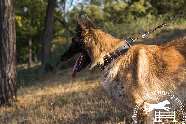 Tervuren brown leather collar of genuine materials with d-ring for leash attachment for any activity