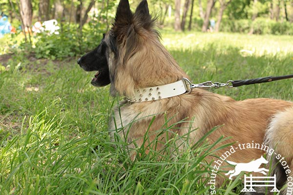 Comfortable white leather Tervuren collar