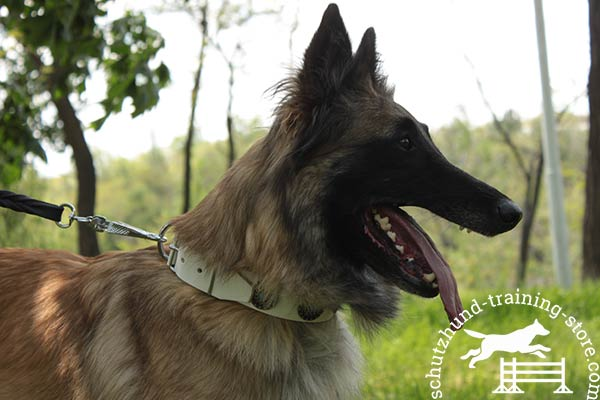 White leather Tervuren collar safe to wear