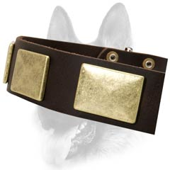 Ornamented leather dog collar for different goals