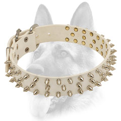 Leather white dog collar with spikes for Schutzhund training