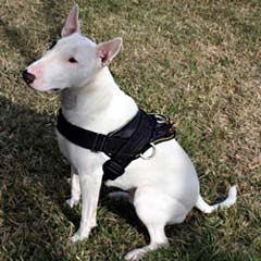 Serviceable unique nylon dog harness