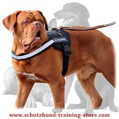 Practical everyday comfy dog harness