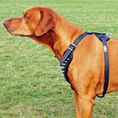 Serviceable beautiful leather dog harness