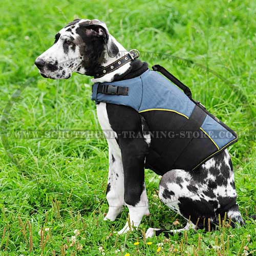 Designer Nylon Dog Harness