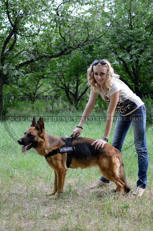 Safety Walking Dog Harness