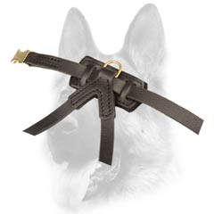 Fully leathern everyday puppy walking harness
