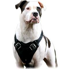 Well-made durable dog harness