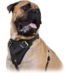 Best available leather harnesses