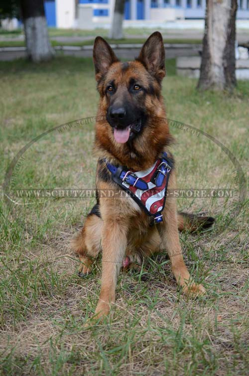 Custom Made Leather Dog Harness for German Shepherd