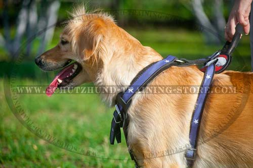 Handpainted Leather Golden Retriever Harness for Regular Wear