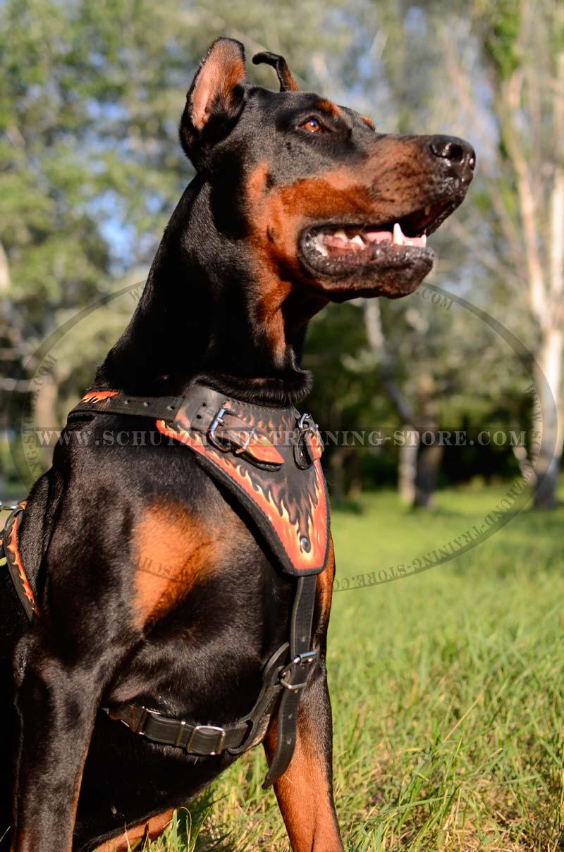 Leather Dog Harness Australia