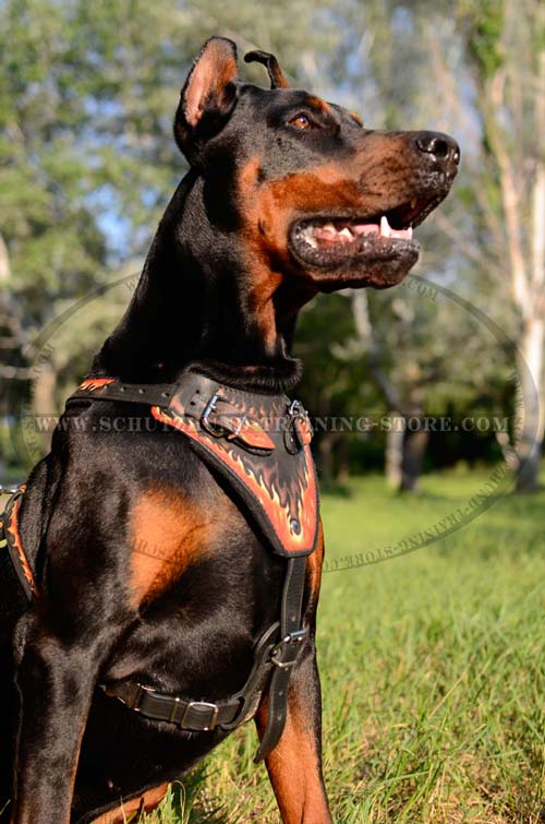 Leather Doberman Harness Painted in Fire Flames