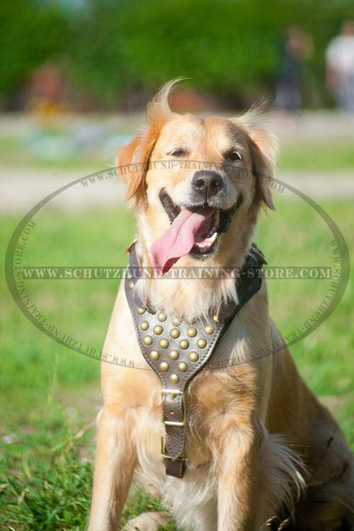 Golden Retriever Harness Designer Dog Gear