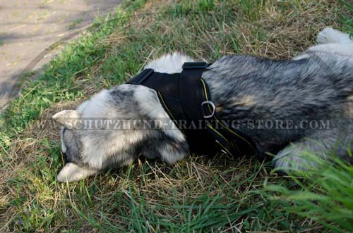 Dog Harness Nylon Meant for Central Asian Shepherd