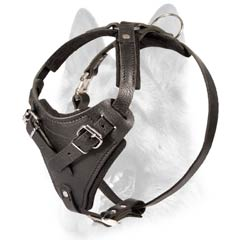 Long-life leather dog harness