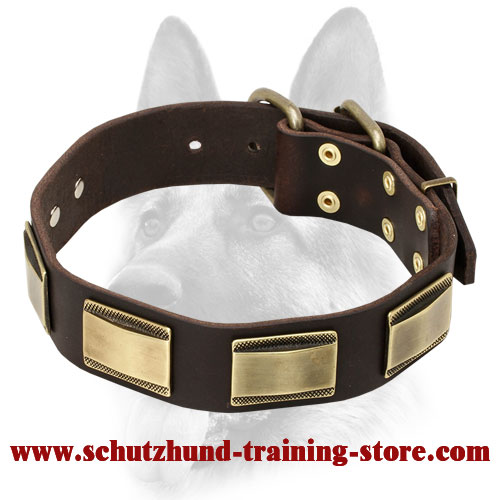 Designer Dog Leather Collar with Brass Covered Plates