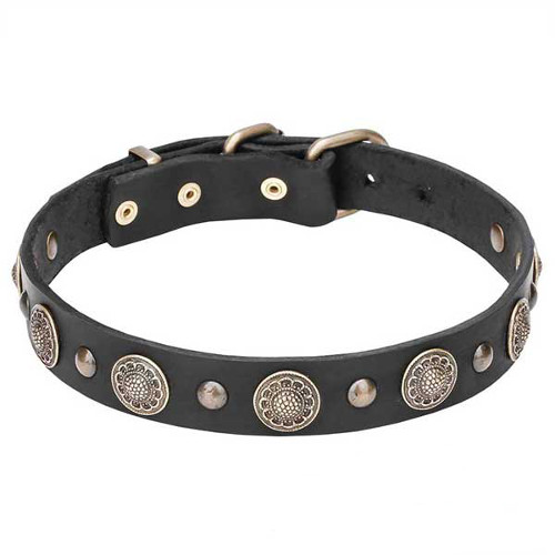 Stylish Leather Dog Collar with Brass Circles and Small Studs