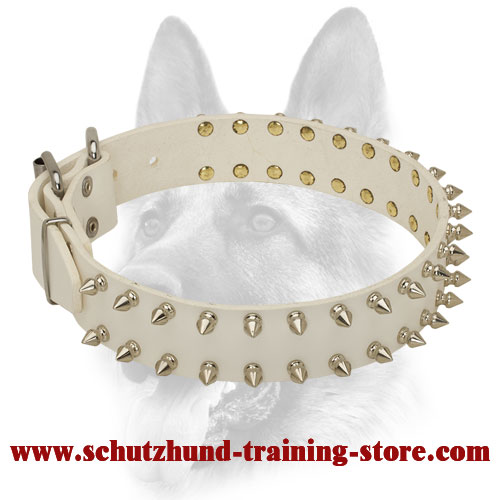 Beautiful White Dog Spiked Leather Collar