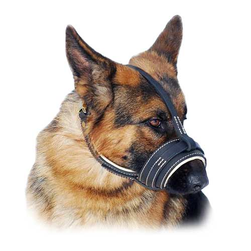 Leather Nappa Padded Dog Muzzle -Professional Pick for Any Dog Breed